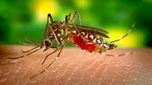 Após dois anos sem casos, malária volta com força na PB